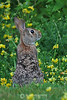 Rabbit in spring flowers