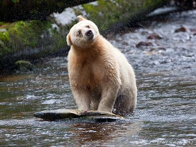 Spirit Bear Shake