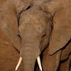 Elephant 0839