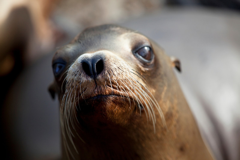 Sea Lion Whiskers _MG_1299