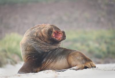 Boris the Sea Lion
