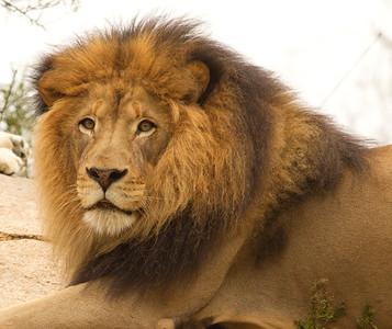 African Lion Safari Park 2014 03 07-2.CR2