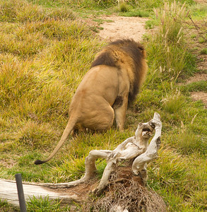 African Lion Safari Park 2014 03 07-5.CR2