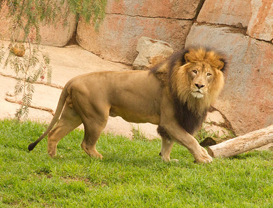African Lion Safari Park 2014 03 07-1.CR2