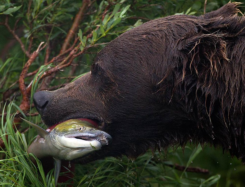 Those Salmon Teeth Didn't Help