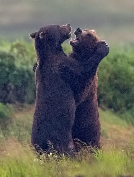 Disagreement or Dancing?