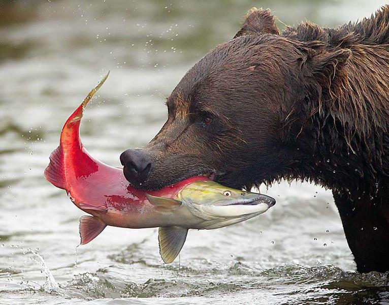 Cool Catch