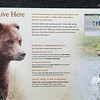 Bears Live Here Sign