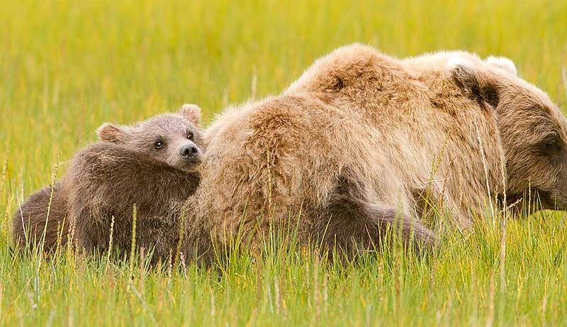 Just a Teddy Bear