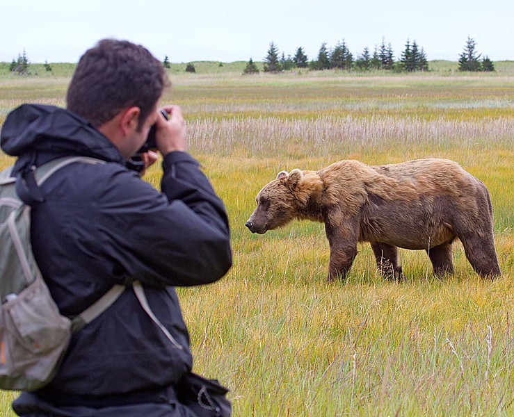 If you want to get close to Alaskan Brown Bears, this is the Place
