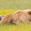 Sow & Cub