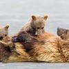 Cubs Nursing