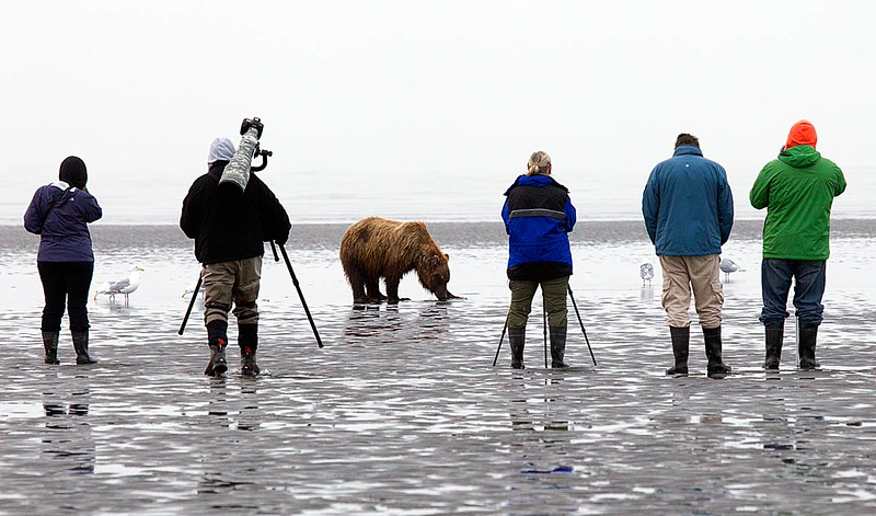 Photographers & Grizzly Low Tide/They care more about Clams than about People