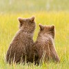Spring Cubs Sitting Side By Side Backs to Camera