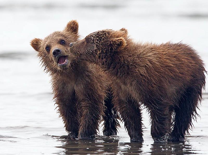 Spring Cubs Playing