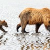 Sow & Cub Tidal FLats Reflections