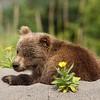Spring Cub on Beach
