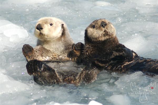 Alaskan Marine Mammals