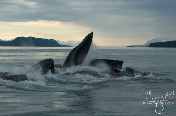 Alaskan Whales/Sea Monsters/Fish