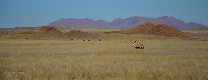 Gemsbok, Southern Namibia, July 2011-2