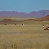 Gemsbok, Southern Namibia, July 2011-2