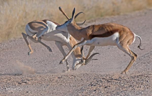 Springbok, Southern Namibia, July 2011