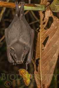 Biodiversity Group, DSC00939