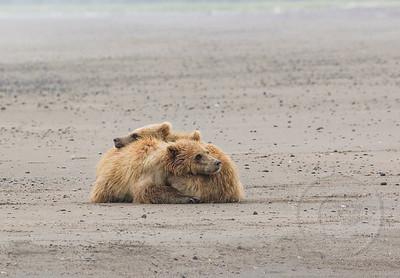 Double Bear Hug