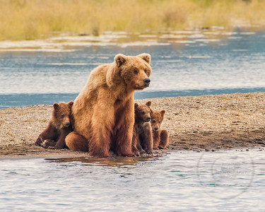 Safe With Mom