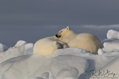 Dreaming of Seals