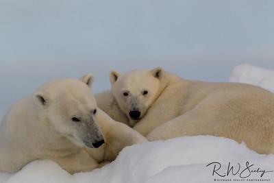 Polar Puppies