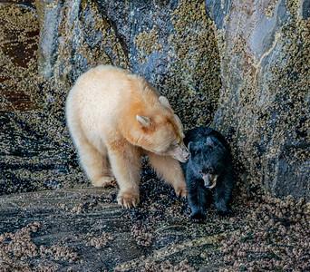 Spirit Bear Touching Moment