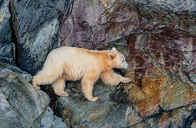 Spirit Bear Cliff Walker