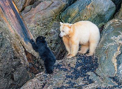 Spirit Bear Teaching Moment