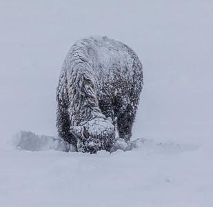 Blizzard Behemoth