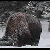 Bison Snow Plow