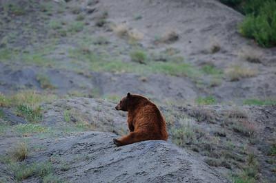 Black Bear-5627