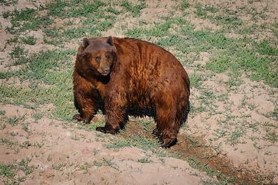Black Bear-4535