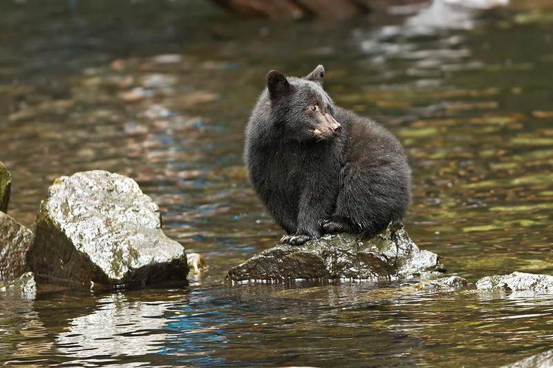 Bear cub.