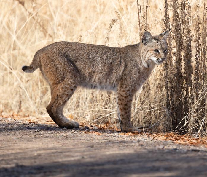 Bobcat Tucson 2021 01 31-1.CR3
