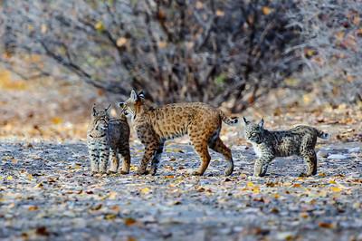 Bobcat-4087, Grand Junction, CO