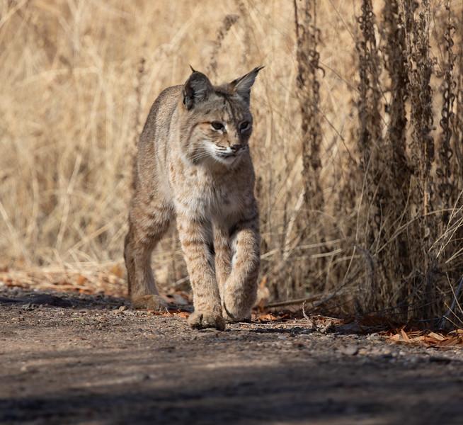 Bobcat Tucson 2021 01 31-3.CR3