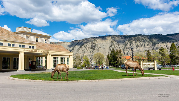 Mammoth Hotel & Elk, Yellowstone NP, WY, USA May 2018-1