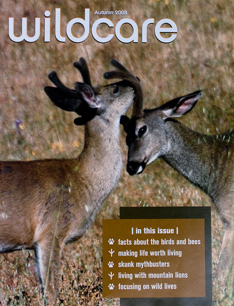 Cover of Wildcare's current newsletter Autumn 2008 with my image of Black-tailed bucks on the cover.