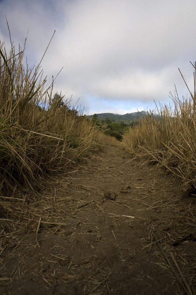 Rift Zone trail, Point Reyes