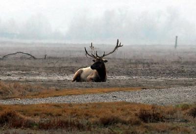 Kern County, Tule Elk Preserve 02/18/07