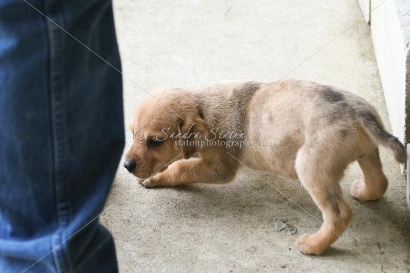 Puppy_SS0708