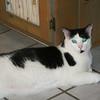 Housecat_SS5775