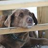Hound Dog_SS1024