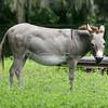 Donkey_SS070001